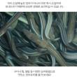 통영바다장어1Kg(대2-3마리)
