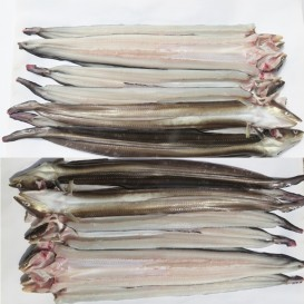바다장어 1kg4~5미