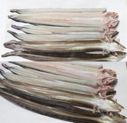 바다장어 소 1kg 6~8미