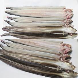 바다장어 소 1kg 7~8미