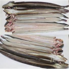 바다장어_대  1kg ( 2~3미)